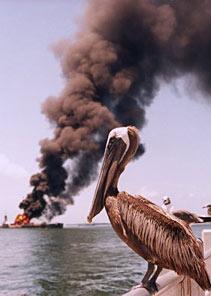 pelican-oil1